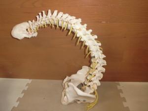 図2.骨格の様子