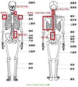 図4.原因となる部位一覧