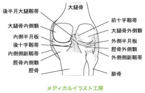 図5.膝周りの図解